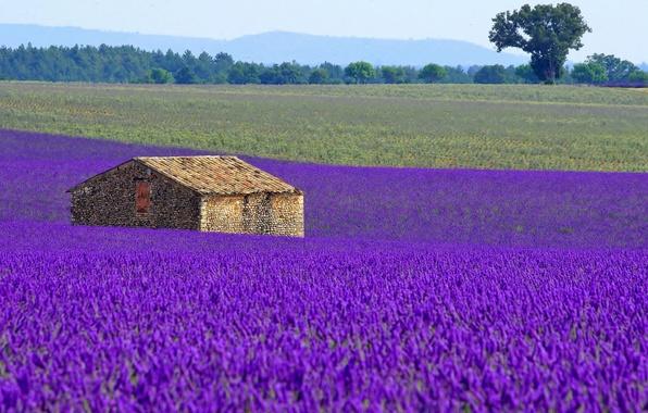Картинка поле, цветы, дом, Франция, луг, лаванда, плантация