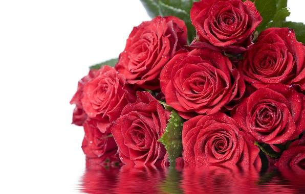 Картинка листья, вода, капли, цветы, отражение, розы, красные, Дорогие Дамы С 8 Марта!