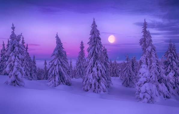 Картинка зима, снег, ёлки, Winter Dream