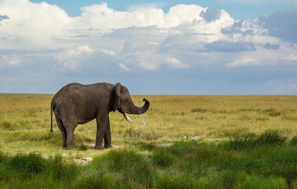 Картинка зелень, небо, трава, вода, облака, капли, пейзаж, брызги, природа, слон