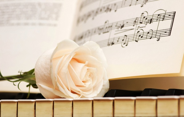 Картинка ноты, роза, клавиши, белая, пианино
