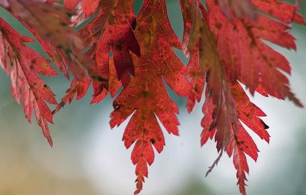Картинка осень, листья, макро, природа, дерево