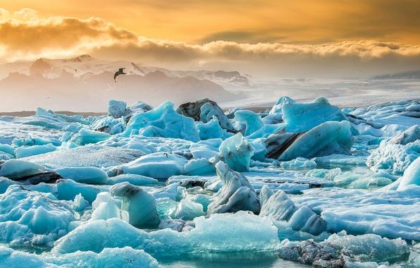 Картинка лед, небо, снег, закат, природа, озеро, птица, льдины, Исландия, Iceland, Jökulsárlón, ледниковая лагуна, Йёкюльсаурлоун