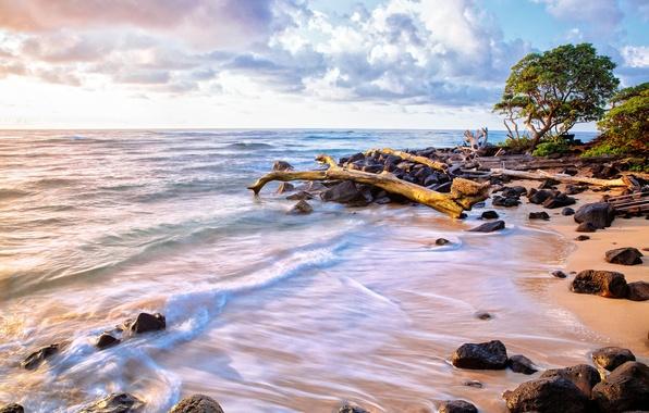 Картинка песок, море, волны, пляж, небо, вода, облака, деревья, ветки, природа, камни, океан