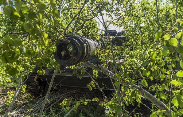 Картинка дуло, танк, кусты, боевой, Leopard 2A6