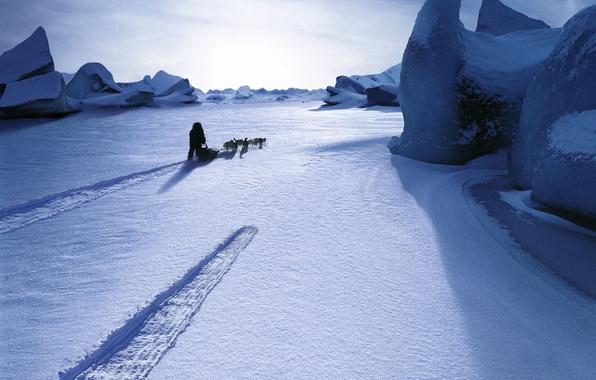 Картинка собаки, снег