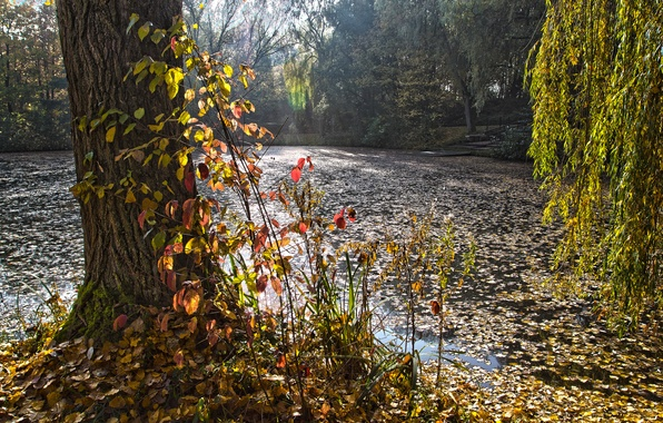 Картинка осень, лес, озеро, пруд, парк