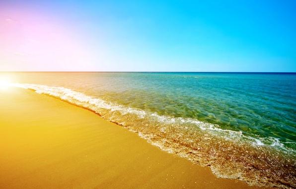 Фото цветы море солнце