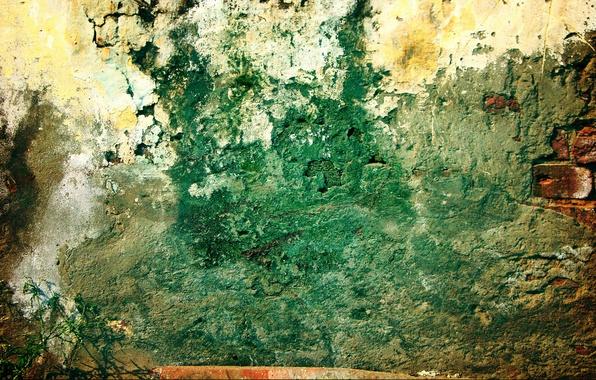 Картинка green, wall, pattern, grunge, plant, brick, dirty