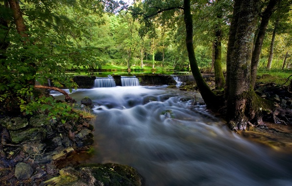 Картинка лес, лето, деревья, озеро, ручей, камни, мох