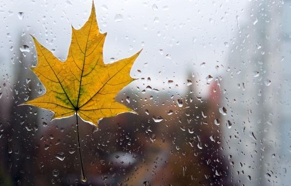 Картинка стекло, вода, капли, макро, желтый, фон, дождь, обои, листик, wallpaper, форма, листочек, rain, широкоформатные, background, …
