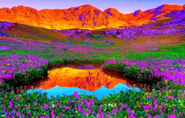 Картинка небо, закат, цветы, горы, озеро, луг
