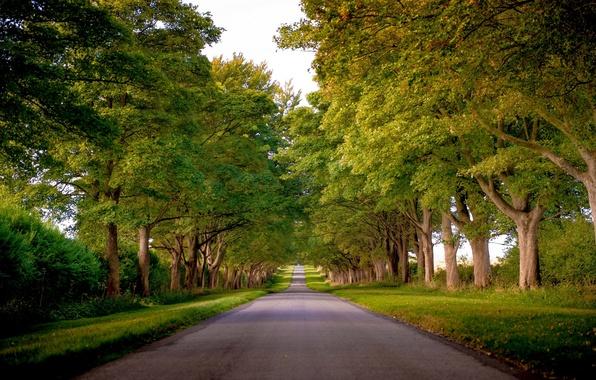 Картинка дорога, деревья, Англия, аллея, England, Norfolk, Kings Avenue, Норфолк, Sandringham
