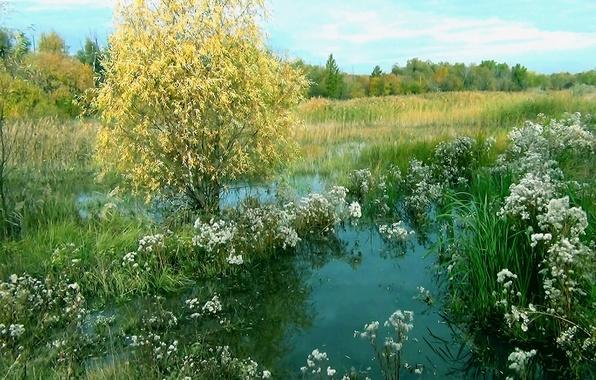 Обои на рабочий стол природа лето вода природа лес цветы