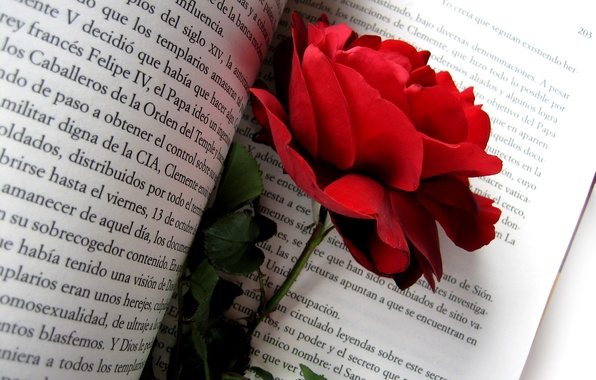 Картинка цветок, цветы, природа, текст, роза, лепестки, бутон, шиповник, книга, красная роза, красная