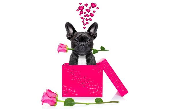 Картинка собака, love, rose, heart, dog, romantic, funny, cute