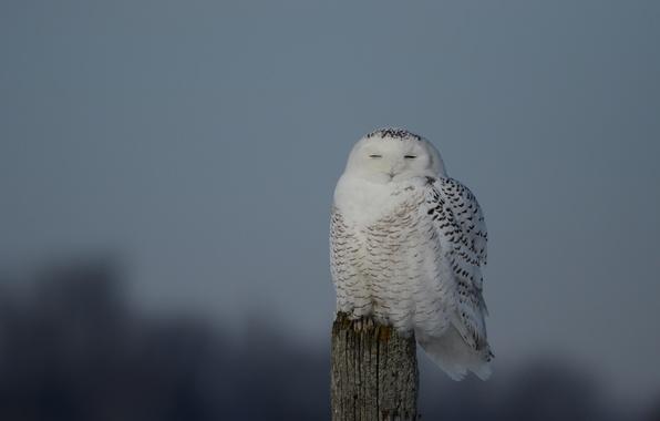 Fun Facts about Owls  Teacher Professional Development