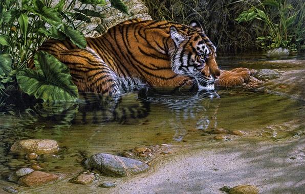 Картинка jungle, tiger, cat, painting, Lee Kromschroeder, thirsty, stream, beast of prey, Tiger River