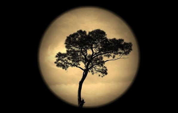 Картинка небо, ночь, дерево, луна, силуэт
