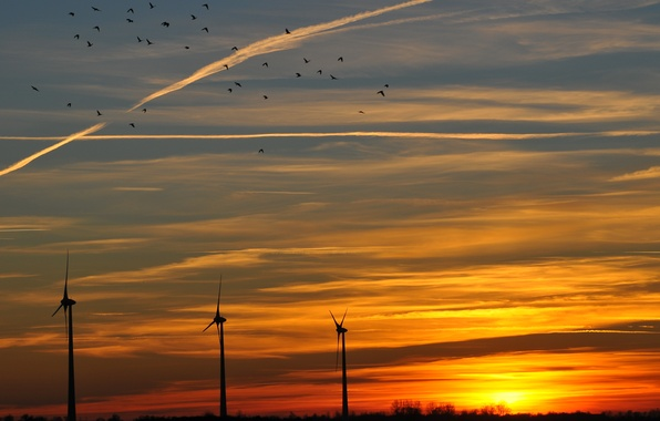 Картинка небо, солнце, облака, закат, птицы, оранжевый, Вечер, ветряки