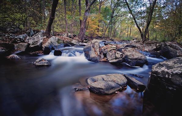 Картинка осень, лес, река, ручей, камни