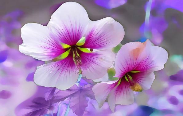 Картинка макро, линии, цветы, лепестки, сад