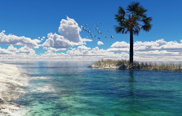 Картинка море, вода, облака, птицы, пальма, чайки, арт, островок, HellsEscapeArtist