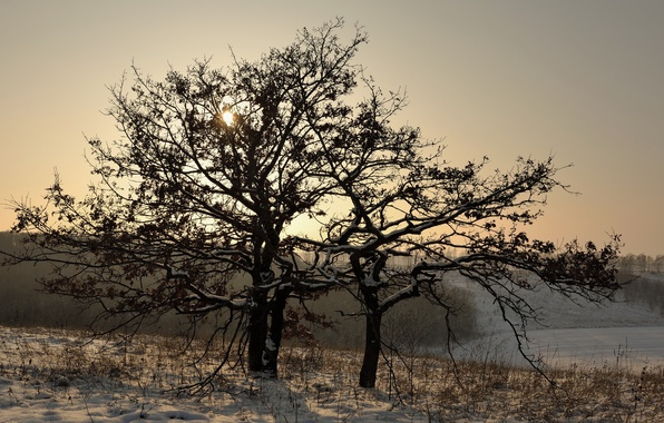 Картинка зима, снег, пейзаж, дерево