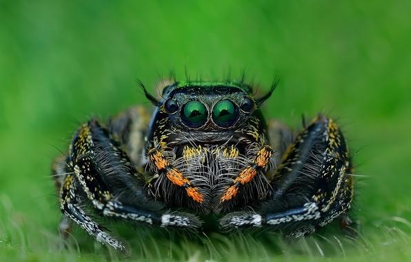 Картинка макро, природа, паук