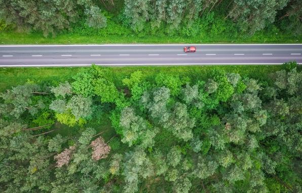 Картинка дорога, лес, трасса, красная машина