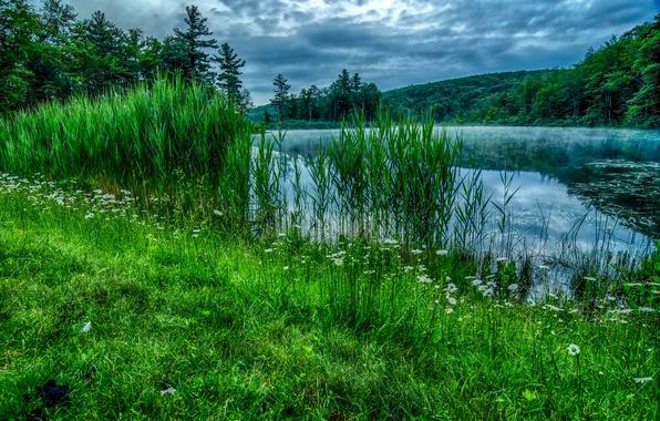 Картинка лес, лето, трава, деревья, река, камыши, берег, ромашки
