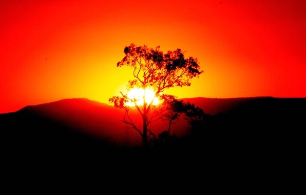 Картинка небо, солнце, закат, горы, дерево, силуэт, панорама