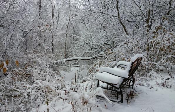 Картинка зима, лес, снег, деревья, скамья
