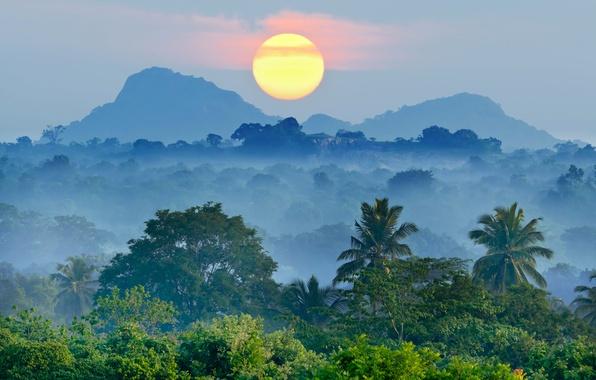 Картинка лес, солнце, деревья, горы, туман, тропики, пальмы, рассвет, красота