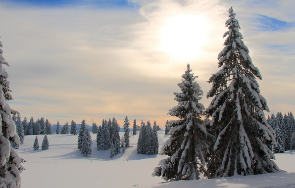 Картинка зима, лес, утро
