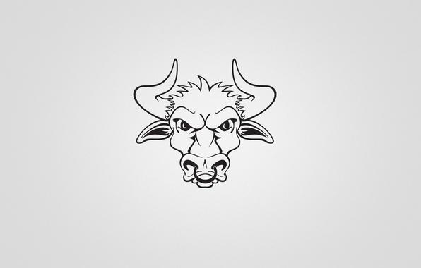 Картинка минимализм, рога, бык, bull
