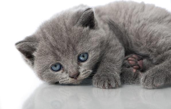 Картинка взгляд, отражение, малыш, котёнок, голубые глазки