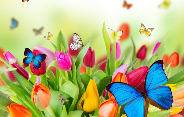 Картинка цветы, природа, коллаж, бабочка, тюльпаны