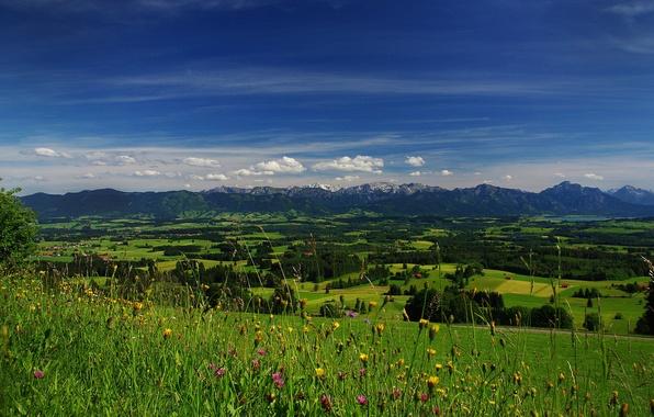 Картинка поле, небо, трава, облака, деревья, цветы, горы, долина, горизонт, луг