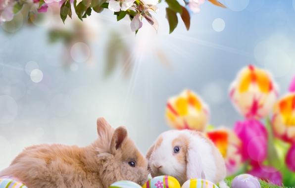 Картинка животные, небо, лучи, цветы, природа, праздник, яйца, ветка, весна, Пасха, кролики, тюльпаны, боке, Easter