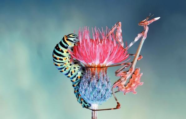 Картинка цветок, макро, насекомые, гусеница
