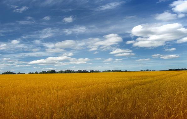 Картинка небо, облака, Поле