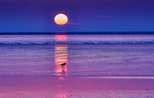 Картинка море, небо, солнце, восход, рассвет, птица, Утро, горизонт, силуэт, синее