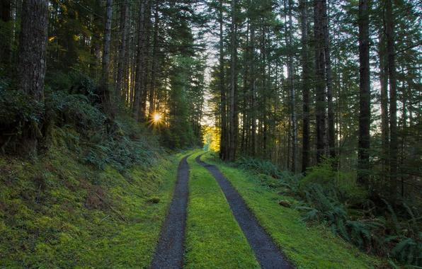 Картинка дорога, лес, солнце, лучи, утро, сосны