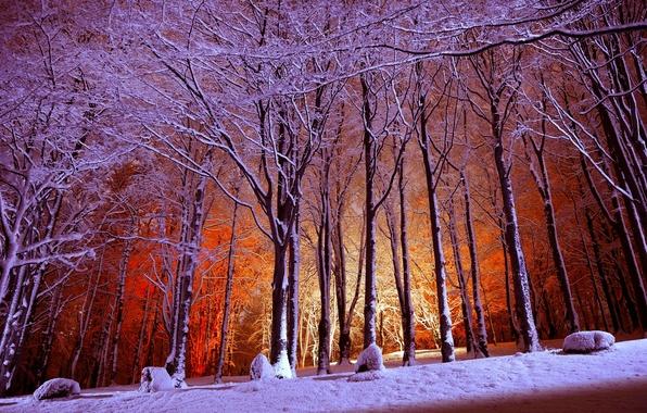 Картинка зима, лес, свет, снег, деревья, парк