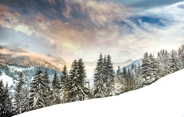 Картинка зима, лес, снег, деревья, горы, Швейцария, ели, Альпы, Switzerland, Alps, Gstaad, Гштад