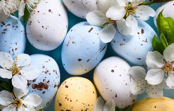 Картинка цветы, ветки, вишня, праздник, яйца, Пасха, Easter, крашенки