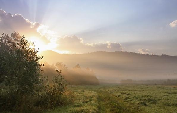 Картинка поле, трава, солнце, деревья, пейзаж, природа, туман, роса, холмы, утро