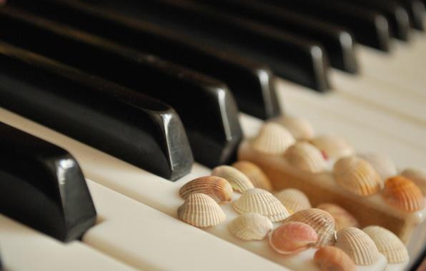 Картинка клавиши, ракушки, белые, пианино, черные