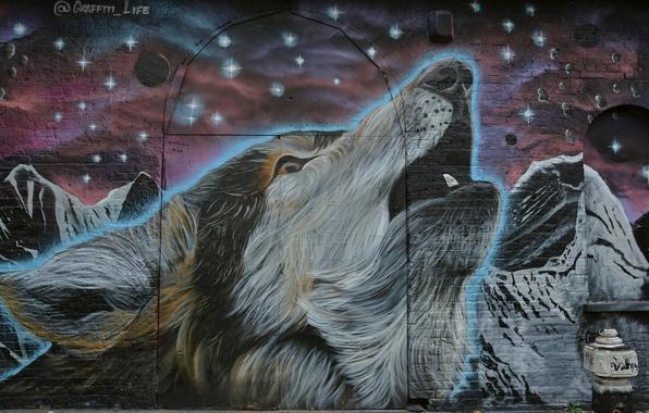 Картинка морда, звезды, фон, стена, граффити, волк, Graffiti